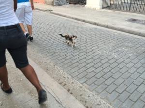 havana_cat_5